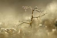 Lichen fruticuleux : Flore, Lichen, Lichen fruticuleux