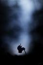 Cyclamen sauvage : Cyclamen sauvage, Cyclamen, Primulacées, plante automne, Plante forestière, Forêt, Automne