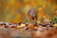 Ecureuil roux - stage automne : Ecureuil roux - stage automne