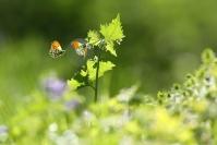 Papillon aurore - stage printemps : Papillon aurore - stage printemps