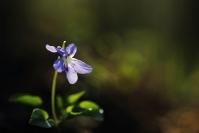 C. Salin Printemps 2012 Violette :