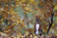 Ecureuil roux - Automne : Ecureuil roux, Stage automne, Automne