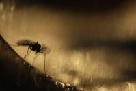 Diptère : Faune du sol, Faune de la litière forestière, Pédofaune, Arthropode du sol, Invertébrés du sol, Diptère, Soil fauna, Invertebrate soil, Fly