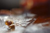 Escargot : Faune du sol, Faune de la litière forestière, Pédofaune, Arthropode du sol, Invertébrés du sol, Escargot, Soil fauna, Invertebrate soil, Snail