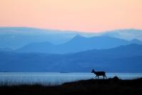 Biche et paysage écosse : Mammifères, Cervidés, Cerf élaphe, Cerf, Forêt, Brame du cerf, Ecosse, île Hybride