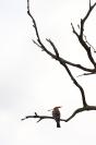 Huppe fasciée : Huppe fasciée, Oiseau, Oiseau Cavernicole, Bocage