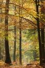 Forêt d'automne : Paysage, Forêt, Automne