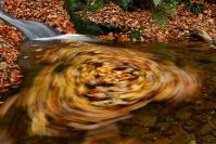 Tourbillon d'automne : Paysage, Ardennes, Belgique, Forêt, Torrent, Automne