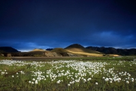 Islande - Landmannalaugar : Paysage, Islande, Landmannalaugar, Vallée glaciaire, Linaigrette arctique
