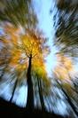 Forêt automne : Paysage, Forêt, Automne