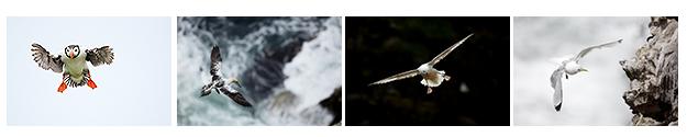 Ecosse oiseaux falaises