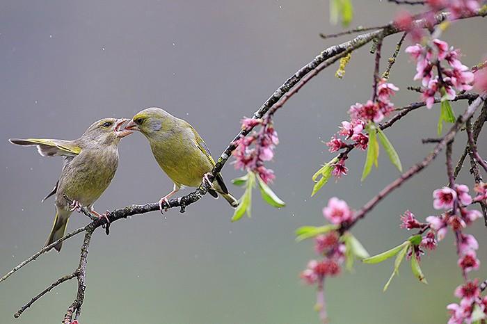 Oiseaux des jardins christophe salin photographe for Oiseaux des jardins