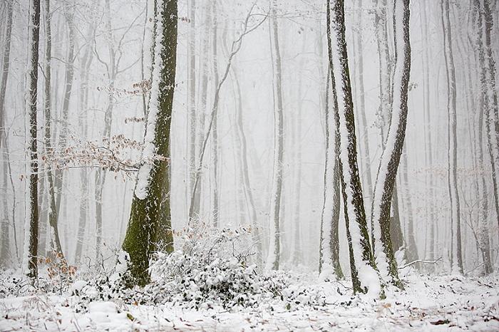 forêt neige1