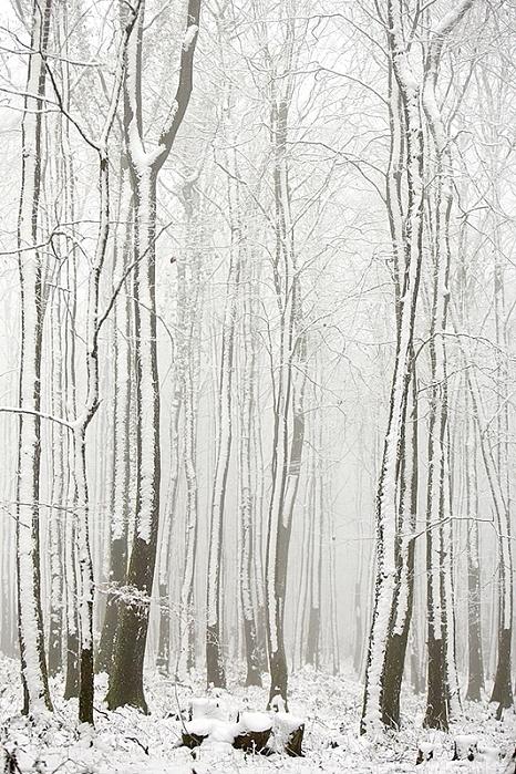 forêt neige2