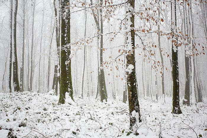 forêt neige3