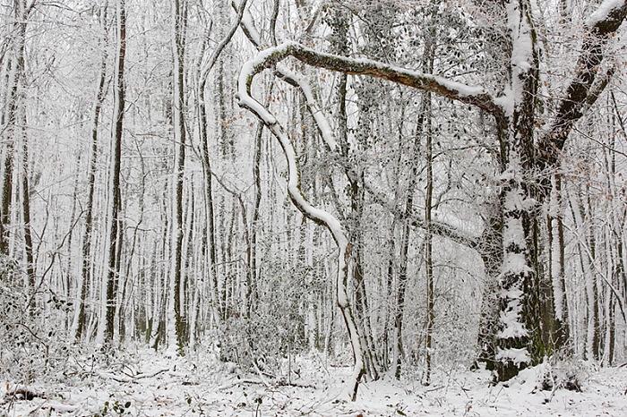 forêt neige4