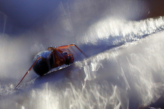 araignée sol