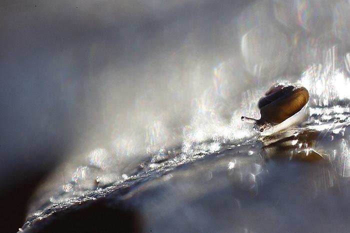 escargot litiere 1