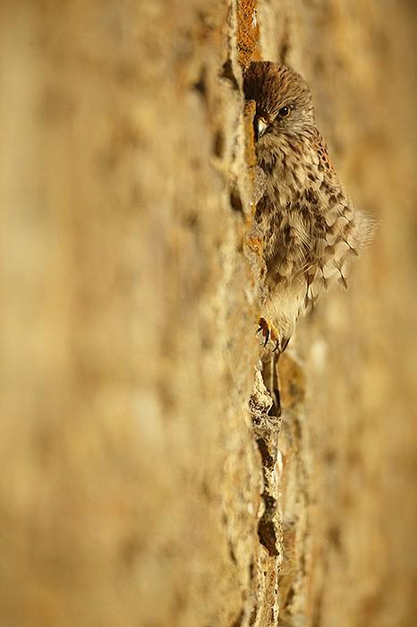 vieux murs 3