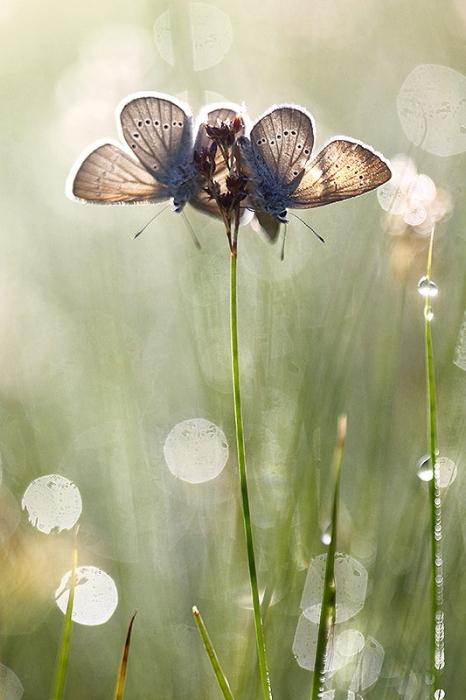 papillon reveil