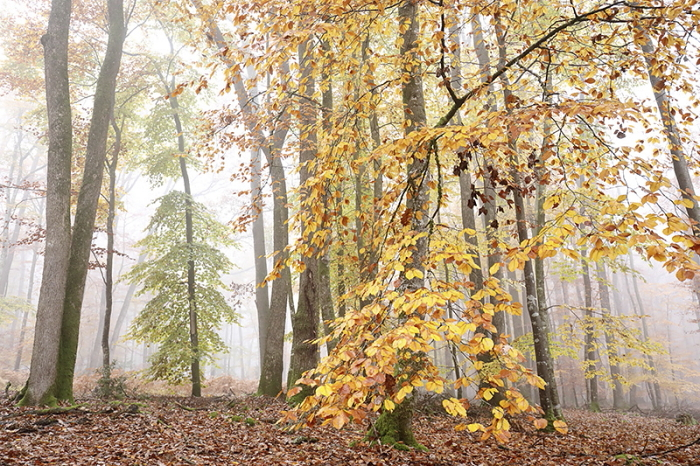 Foret automne 2