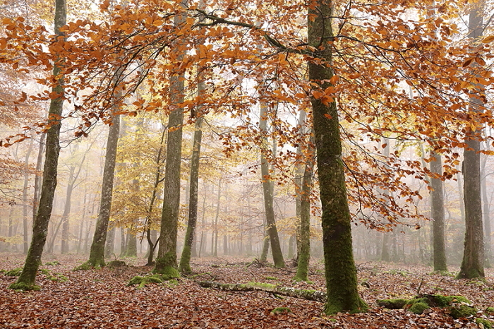 Foret automne 3