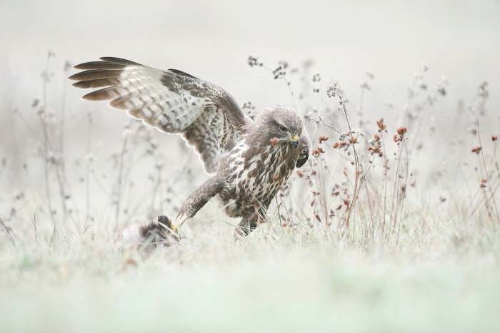 buse variable 02