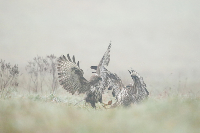 buse variable 06