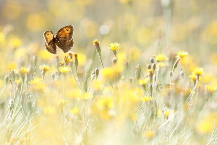 Papillon vol 2